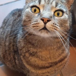 avatar van AdrievMer86